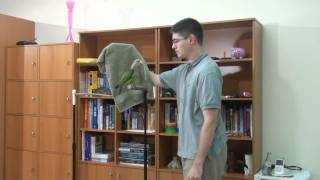How to Towel Tame Parrot - Toweling Truman