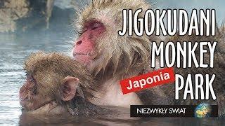 Baixar Niezwykly Swiat - Japonia - Jigokudani Monkey Park