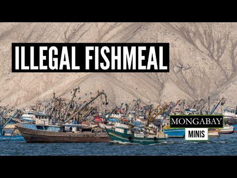 Peru's Illegal Fishmeal Production