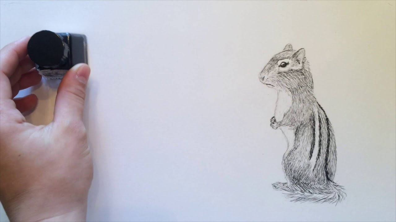 narrated tutorial how to draw a chipmunk with ink