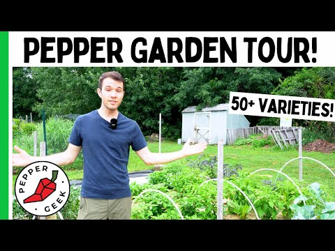Here is What a Pepper Geek's Garden Looks Like…