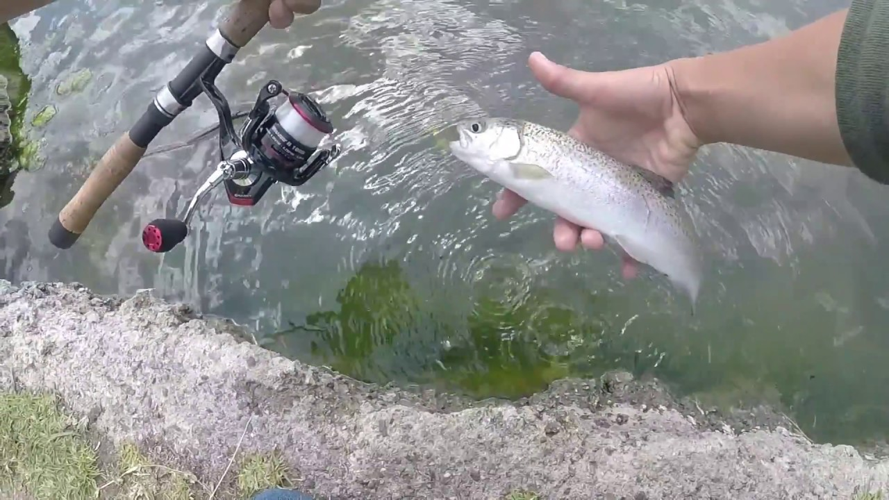 How to go Trout Fishing at a Stocked Pond - Best Way to Catch Stocked Trout  Video - KastKing