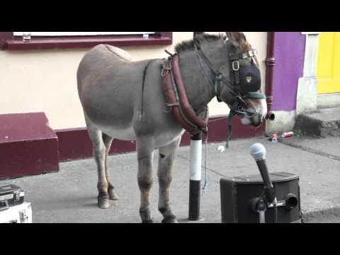 Singing Donkey in Ballinasloe