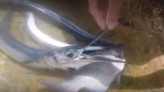 UNTIE THE LINES II #17 - San Andres Fish