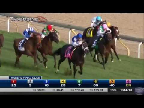 สนาม Woodbine :  เที่ยว 12 : Woodbine Mile Stakes :  17 ก.ย. 59