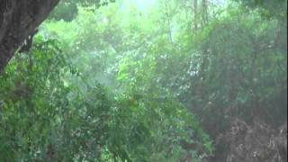 Heavy Rain & Thunder (For Relaxation)