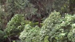 Oregon Japanese Garden Society's Portland Garden 1o3 on Jimbo Jitsu's Farm House Show