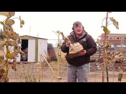 Sunflower Seeds | From the Ground Up