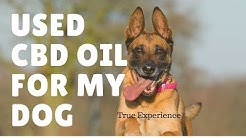 CBD oil for dogs: Experience, Benefits & Dosage !!