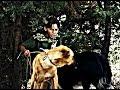 Arka Sokaklar - Tekin Metin'in Sevgilisinin Köpeğine Tuzak Kurdu