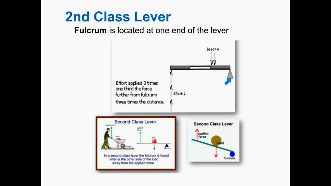 2nd Class Lever Youtube