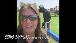 Lab mix Dexter obedience training testimonial: Cincinnati Dog Trainers Off Leash K9