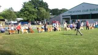 Uk 63rd Breed Championship Show Stoneleigh Park 19.07.2015 - Golden Retriever