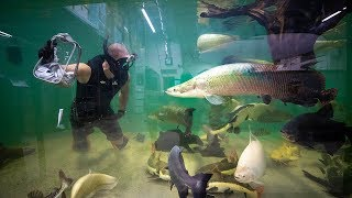 Swimming In Worlds Largest EXOTIC Aquarium!! (Hand feed fish)| Jiggin With Jordan