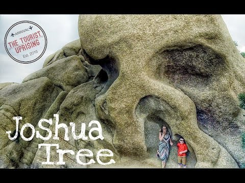 Things to do with kids in Joshua Tree National Park! (budget family travel tips)