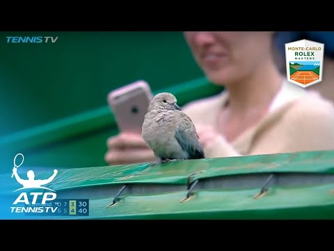 Thumbnail: Funniest moments: Djokovic, Nadal, Goffin...and *that* bird! | Monte-Carlo Rolex Masters 2017