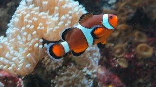 Chicago - 6 Of 8 - Shedd Aquarium