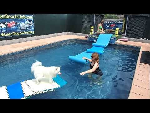 Weeeee!! 15 year old mini American Eskimo Dog Nicki runs fast on water!