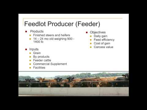Introduction to Animal Agriculture  The Minnesota Beef Industry