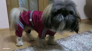 Отличный Дождевик (комбинезон) для Собак и Кошек с AliExpress  за 3$
