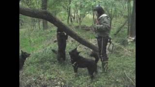 なのかの家のなの子とかの子が、陸の川に遊びに来てくれました。 森の中...