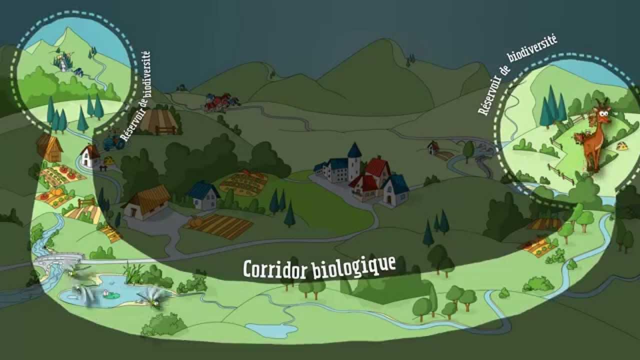 """Résultat de recherche d'images pour """"corridors écologiques"""""""