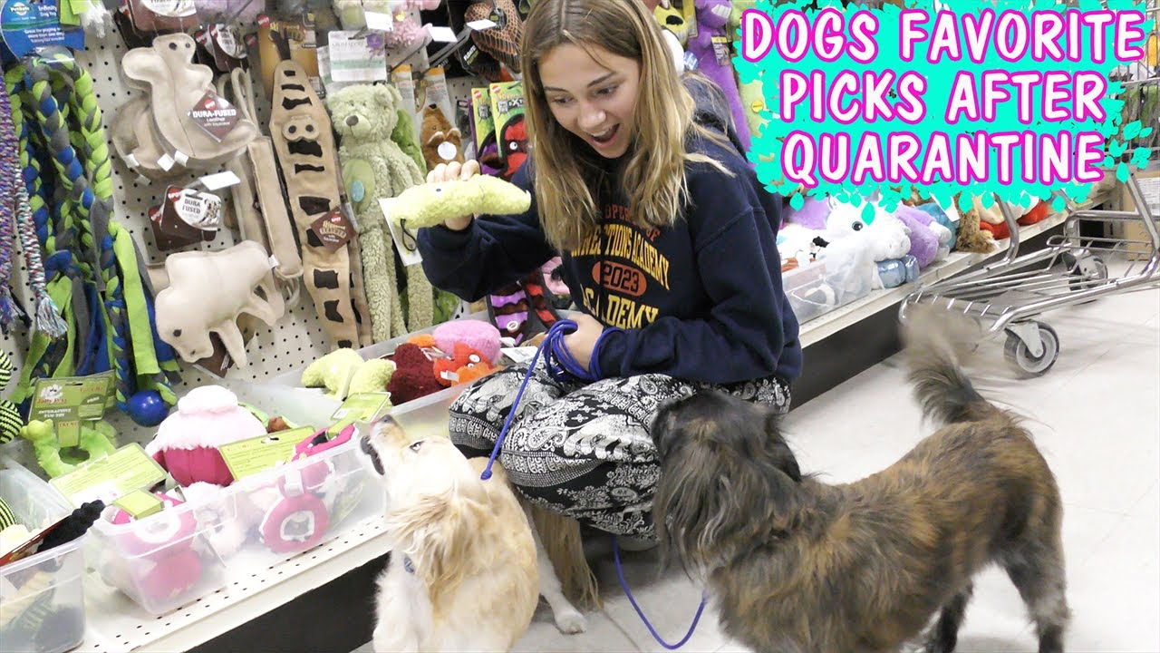 1st Time Letting our Dogs go Shopping Since Quarantine | We Are The Davises