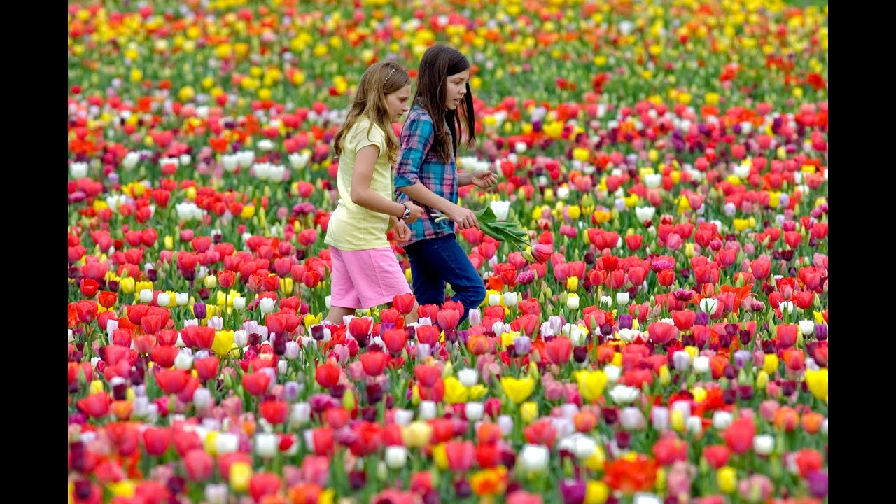 Beautiful Flower Gardens Of The World you won't believe this is flower garden | most beautiful flower