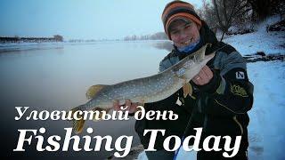 Уловистая рыбалка - щука, жерех, окунь, судак и пакет - Fishing Today