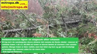 Soldaterskoven i Tønder ligner en slagmark efter orkanen