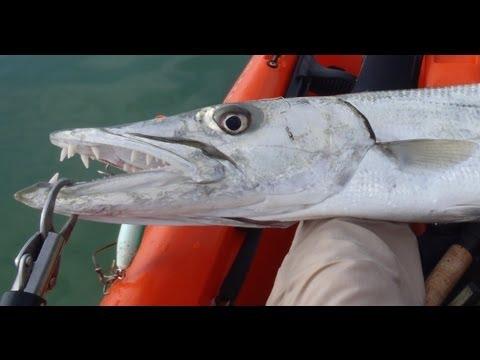 игра barracuda