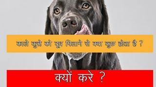 काले कुत्ते को दूध पिलाने से क्या कुछ होता है   ऐसा क्यों करे