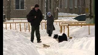Жители п.Копаево возмущены отстрелом бездомных собак