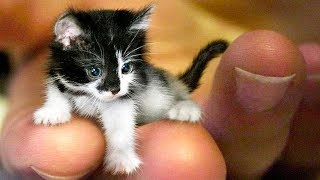 The SMALLEST CATS In The World