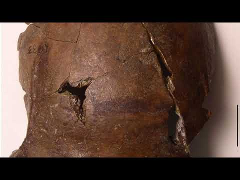 News Update Ancient skull 'oldest tsunami victim' 26/10/17