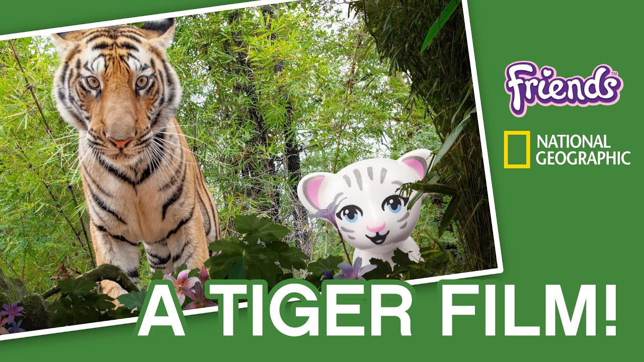 Can we make a movie with tigers? - LEGO Friends & National Geographic