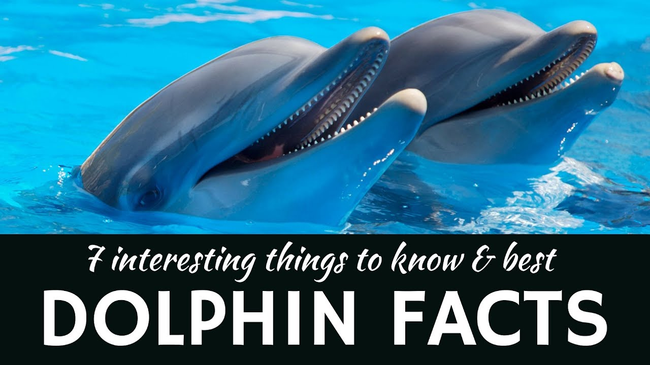 dolphins 7 fun facts about aquatic animals and mammals youtube