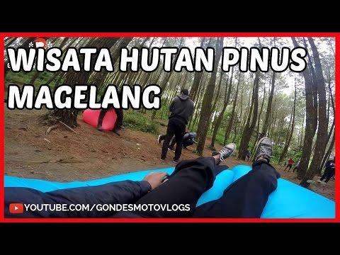 Wisata Hutan Pinus Top Selfie Pinusan Kragilan Di Magelang