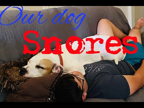Smart dog snores loud