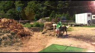 Ponypflege leicht gemacht!
