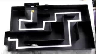 Animal training (maze) - Jack the white mouse