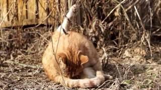 Кот яйца лижет