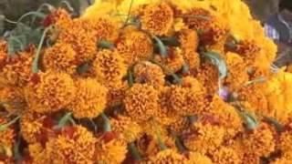 Ofrecen comerciantes de Tepeyanco la flor de muerto