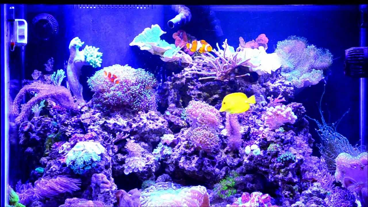 Coral Reef Aquarium 65 Gallon HD Saltwater - YouTube