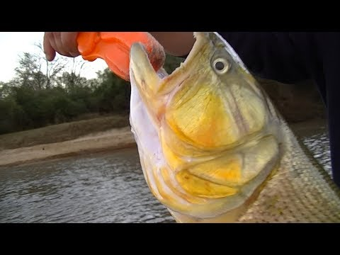 TV Nº283 04-08-2017 Pesca en Concepcion del Uruguay, provincia de Entre Rios