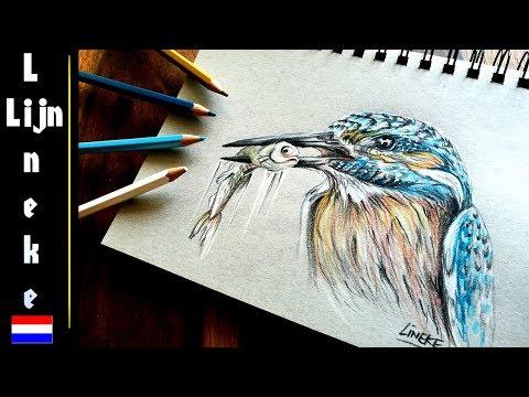 Fonkelnieuw IJSVOGEL tekenen kleur potlood tekening - YouTube KZ-93