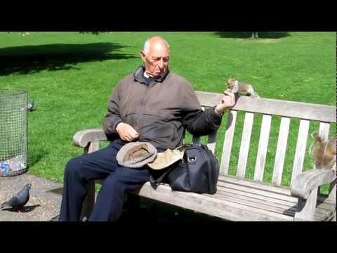 Man feeding squirrels at St. James Park, London