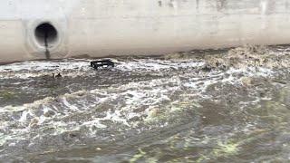 Mini Flash Flood after Heavy Rain in Irvine (Orange County, California)
