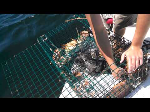 lobster pots and flounder fishing