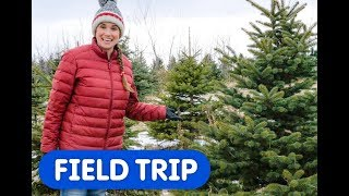 Let's Find A Christmas Tree! | Caitie's Classroom Field Trip